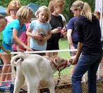 2013 - Baily's Dairy Farm Animals